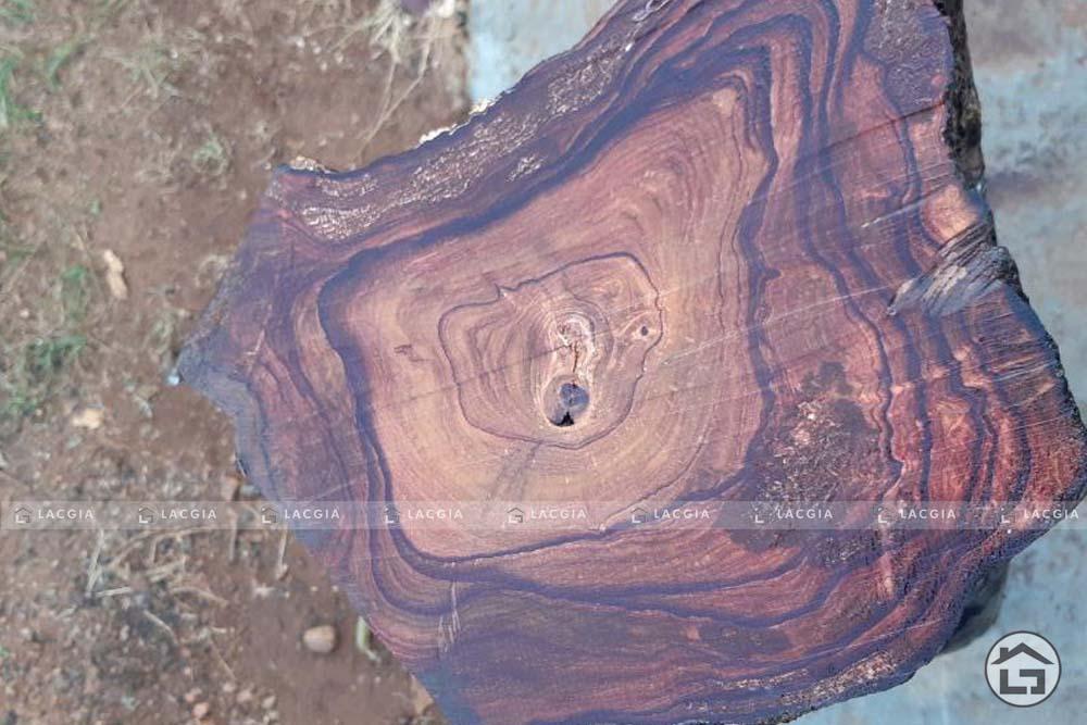 go cam lai 1 - Gỗ cẩm lai là gỗ gì? Giá bao nhiêu - Có tốt không?